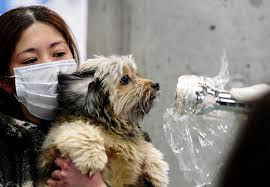 images japanse girl and dog
